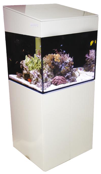 Avec AQUALOC®, offrez un aquarium d'eau de mer à vos patients !